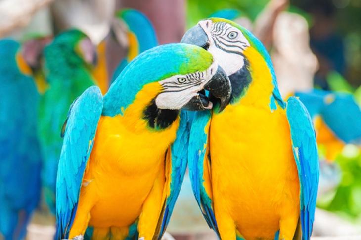 Friendly Macaws