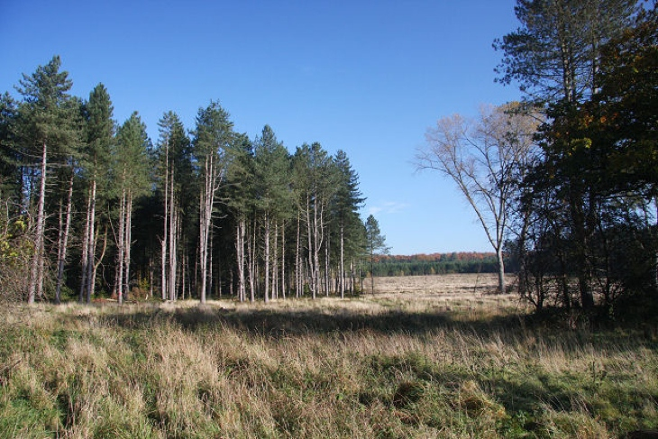 The Brecks and South Norfolk Vista