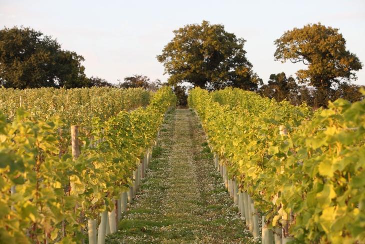 Humbleyard Vines