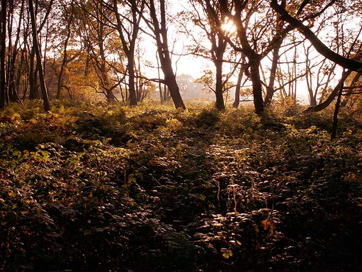 Woodland at Princ'es Barn.jpg
