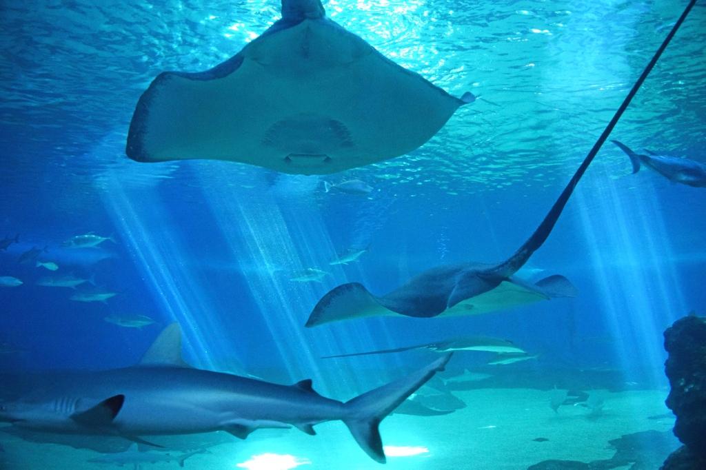 Aquarium Life in Norfolk
