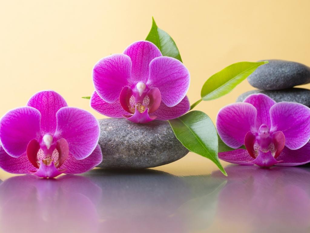 Health and Beauty Spa