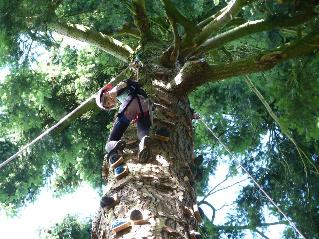 Tree Climbing at ExTREEme Adventure