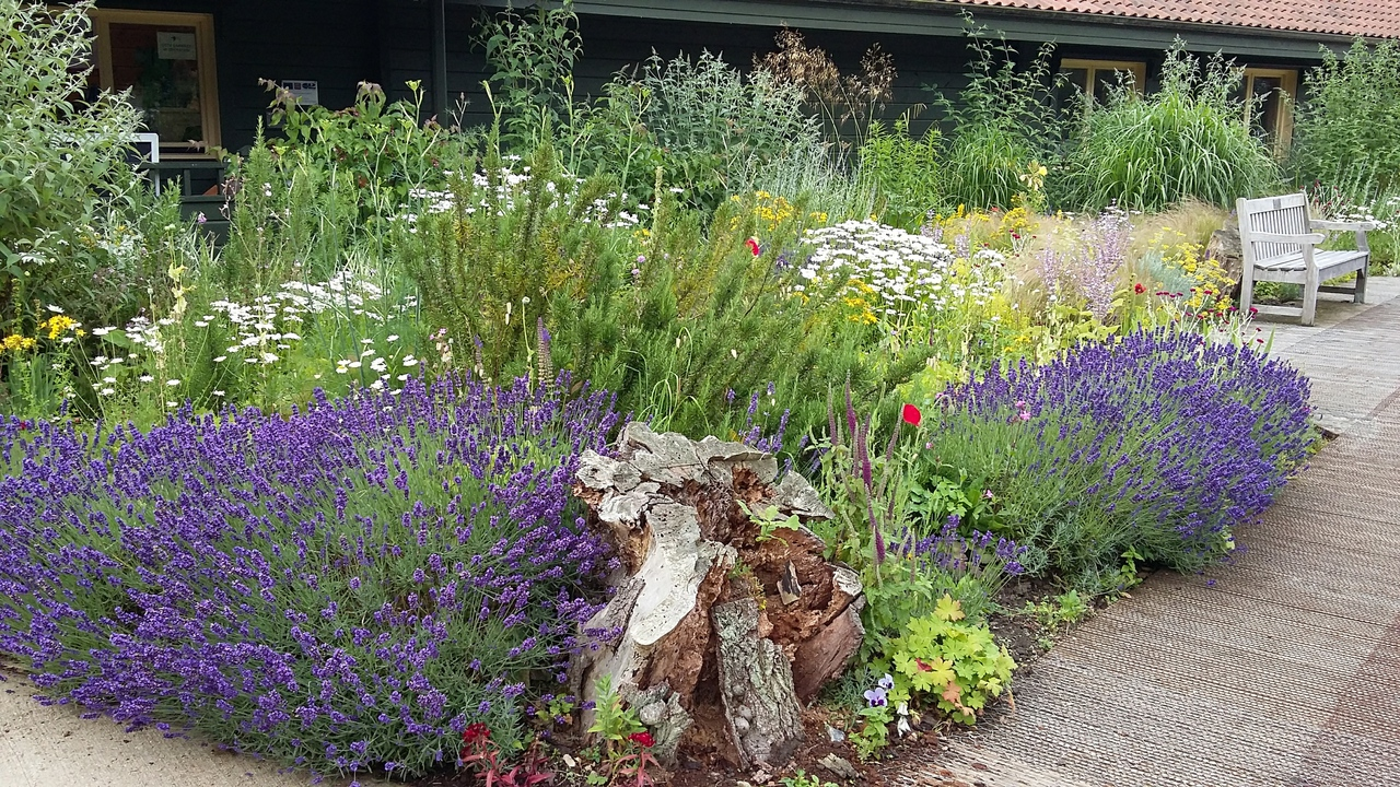 Flowers at the Visitor Centre at Sculthorpe Moor in Norfolk