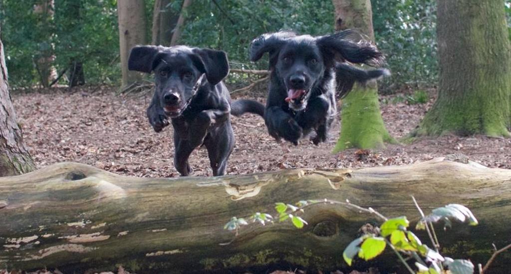 Dogs having fun in Norfolk