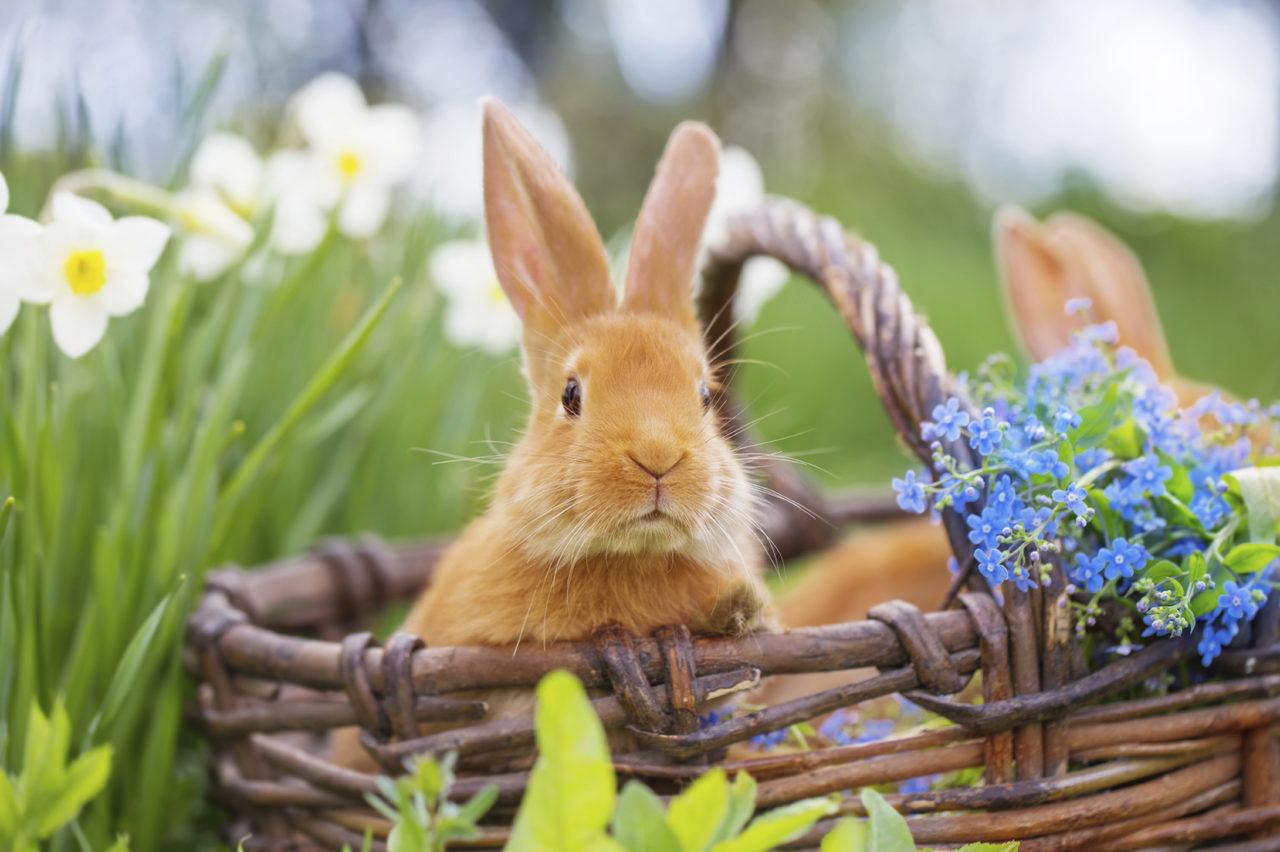 Discover Norfolk Easter Bunny